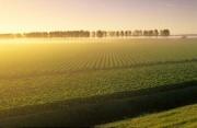 Netherlands, Nagele. View over the fields near Nagele