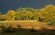 Couple walking between fields of heath