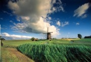 Windmill in the polder