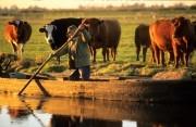 Farmer standing in a small boat