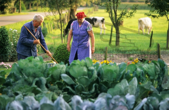 Senior couple working in their vegetable garden
