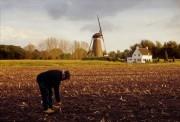 Van Gogh scene: Man harvesting potatoes