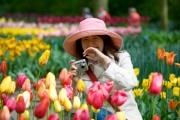 Japanese tourist taking a picture in the  Keukenhof Flower Exhibition