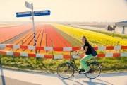 Girl cycling alongside a bulbfield