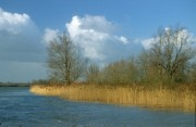Flora in the Biesbosch
