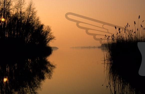 Twilight over the Biesbosch