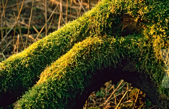 Trunk of a tree covered with moss
