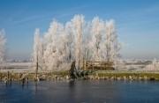 White frost at the trees along the Kerkweg.