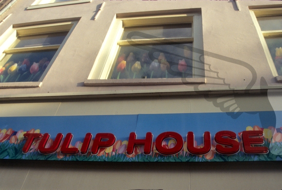 The Tulip House